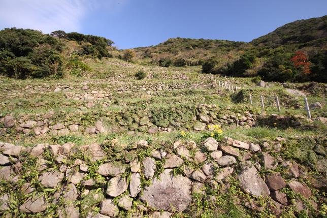 谷山展望所から見る段々畑-南さつま海道八景-