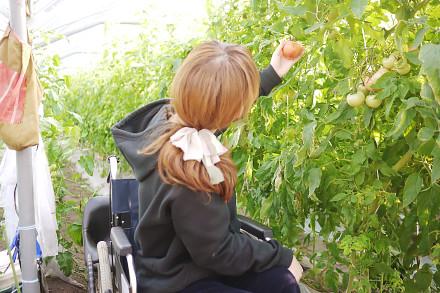 野菜・くだもの収穫体験