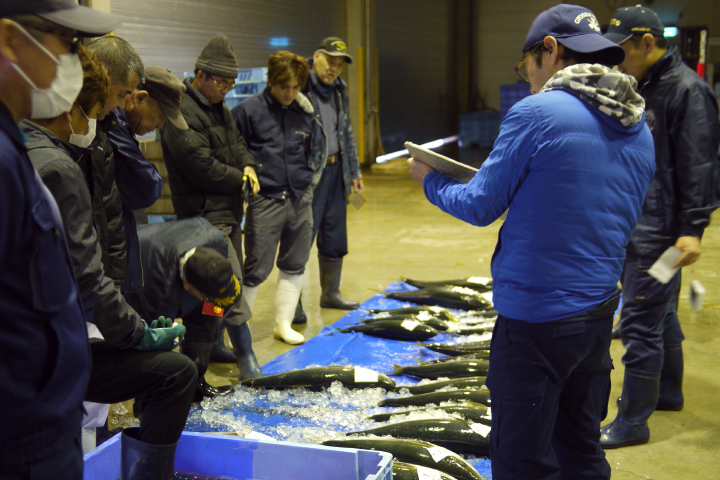 Bidding at Fish Auction