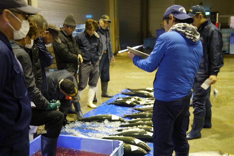 魚セリ落とし~オリジナル海鮮丼作り
