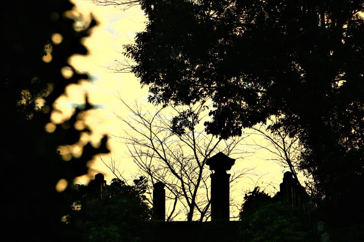 別府城跡の風景
