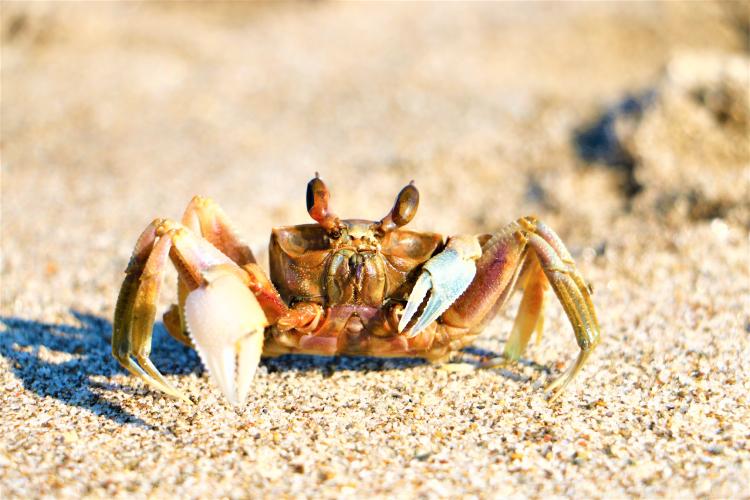 日本三大砂丘吹上浜で見られる生き物