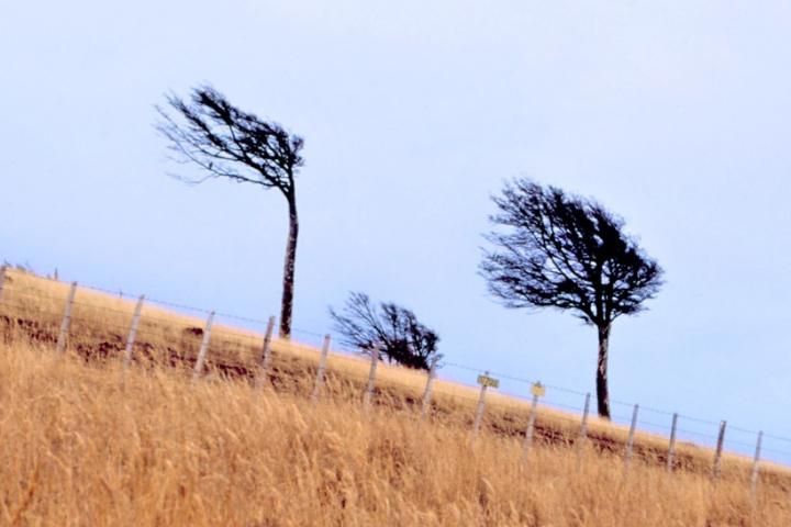 風が強いパタゴニア地方の傾いた木