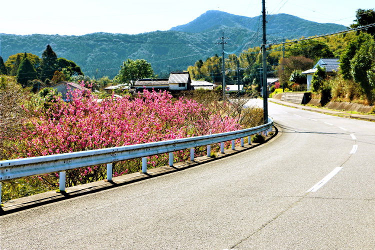 枕崎の風景