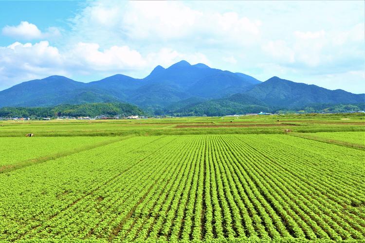畑と金峰山