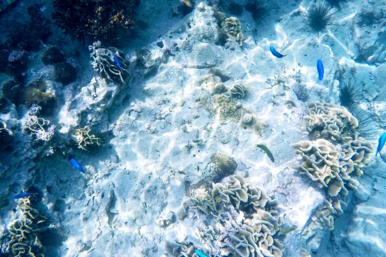 海底の風景